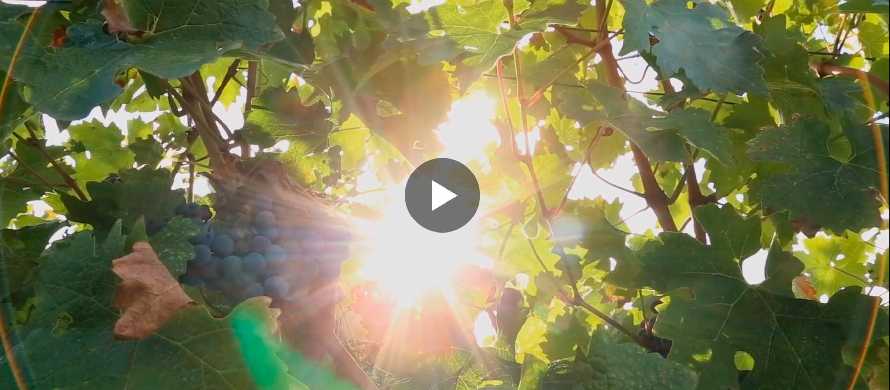 Vidéo YouTube sur les Vignobles Marie-Laure Lurton